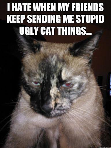 Pin On Cat Meme