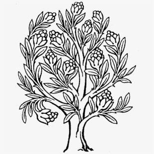 Money Tree Png Download Gifs Drawing Of The Rubber Tree Tree Drawing Money Trees Enchanted Tree