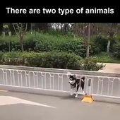 Two type of animal: Amazing and MORE Amazing  #memes #jokes #funny #humor