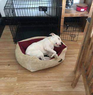 Adopt A Rescue Dog Greenleaf Animal Rescue