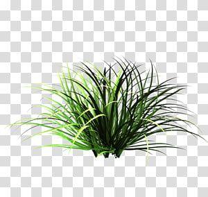 Green Grass Patch Of Grass Lawn Garden Nature Tall Grass Transparent Background Png Clipart Green Grass Background Lawn And Garden Grass Flower