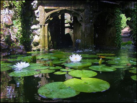 My inner landscape Victorian Gardens, Nature Aesthetic, All Nature, Motif Floral, Exotic Plants, Water Lilies, Faeries, Land Scape, Business Cards