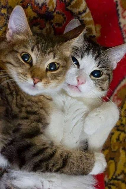 Cute Cat Picture Cute Kittens Pictures Kittens Cutest Cute Cats