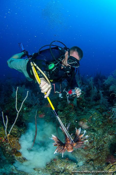 17 best Lionfish Hunting images on Pinterest Deer hunting - marine biologist job description
