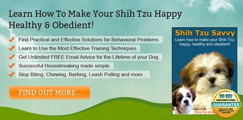 Shih Tzu Savvy Havanese Shih Tzu Training Puppy Training