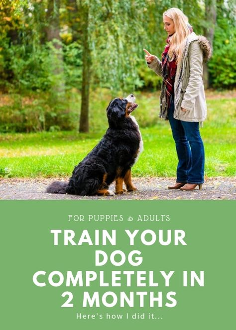 Train Your Dog Fast - Dog Training Basics for Adults and Puppies