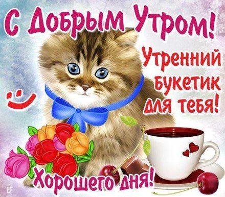 Картинка забавный котенок желает доброго утра - лучшие ...