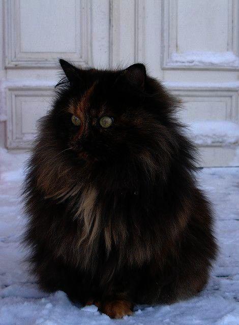 Stunning Beautiful Cute Cats Pics Beautiful Cats Beautiful