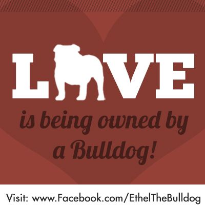 Get your Bulldog quotes, pictures and misc info by following the Cutest English bulldog in Chicago!!! Ethel Mae is on Facebook: http://www.facebook.com/EthelTheBulldog