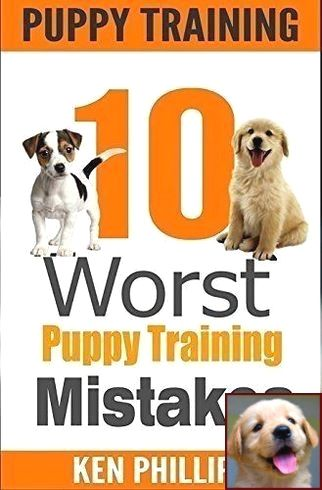 House Training A Maltipoo Puppy And Clicker Training With Dogs