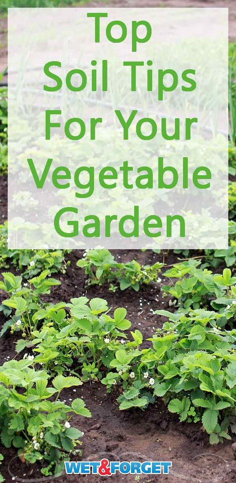 See Our Top Tips To Liven Up Your Soil And Grow Your Best Veggies