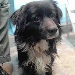 Urgent Baldwin Park California Terrier Unknown Type Medium Meet A5163260 A Male Dog For Adoption Https Www Adoptap With Images Pets Dog Adoption Animal Rescue