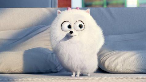 Download Gidget The Secret Life Of Pets Character 2880x1620 With Images Pets Movie Secret Life Of Pets