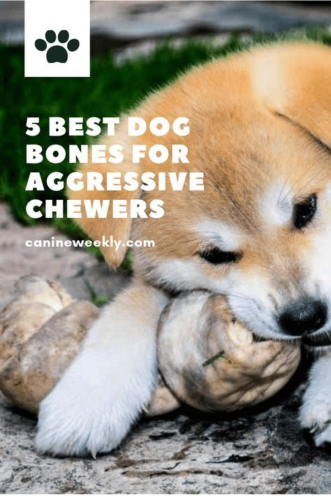 5 Best Safe Dog Bones And Chews For Aggressive Chewers