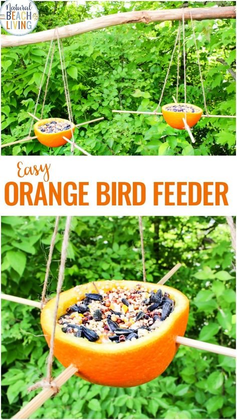 Orange Bird Feeder, Bird Seed Ornaments, Easy Birdseed ornaments for kids and adults to make, Homemade Bird Feeders like the pine cone bird feeder, apple bird feeder, Plastic Bottle Bird Feeder, DIY birdseed ornaments and Bird activities for kids #birds #birdfeeder #homemadebirdfeeder #birdseedtreats #birdseedornaments