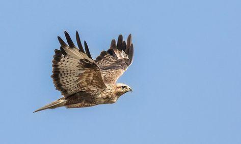 Wind farms kill off three QUARTERS of predatory birds
