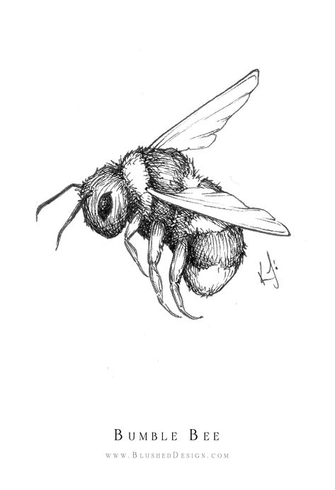 Bumble Bee ink illustration by Katrina Crouch of Blushed Design. Fine art illustrations with delicate ink shading capture this beautiful bee in mid flight. Girl Illustration Art, Bumble Bee Illustration, Illustration Agency, Ink Illustrations, Watercolor Illustration, Mountain Illustration, Simple Illustration, Digital Illustration, Cool Art Drawings