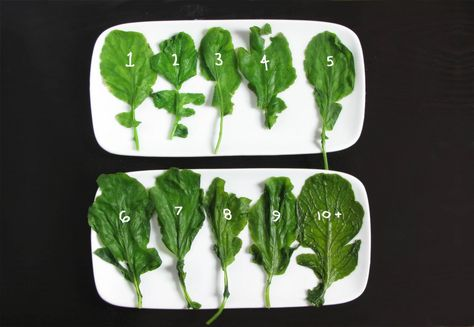 How to Keep Your Greens Vibrant by kitchenscraps