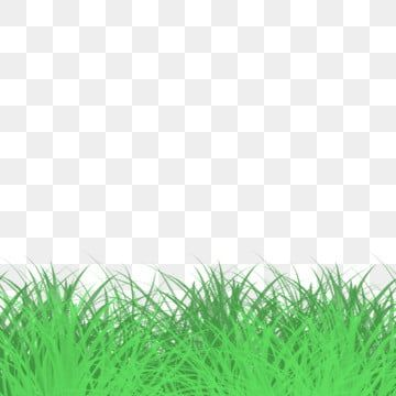 Decorative Green Space Fresh Green Grass Grassland Grass Green Grass Cartoon Green Grass Png Transparent Clipart Image And Psd File For Free Download Green Grass Background Grass Background Green Grass
