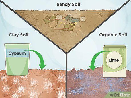 Prepare Soil For Roses Organic Soil Rose Sandy Soil