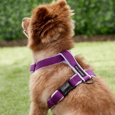 Planet Dog Cozy Hemp Adjustable Dog Harness Purple Small Chewy