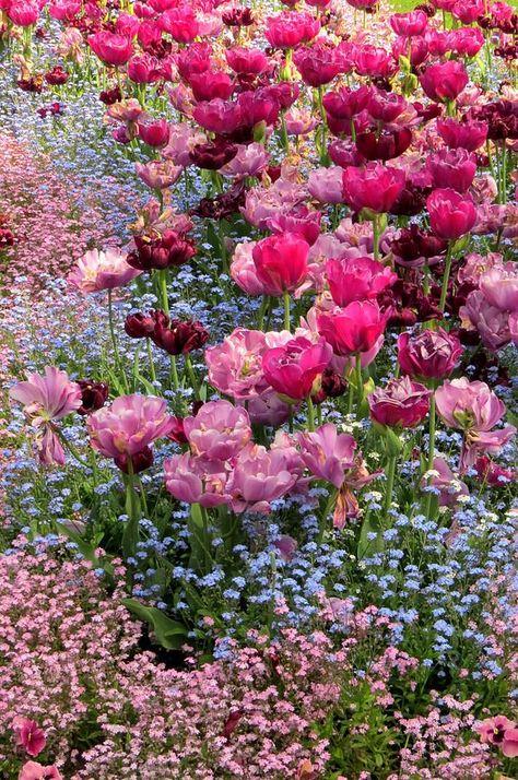 #springtime #bunt #spring #Frühling #PlantenunBlomen #EuropaPassage #EuropaPassageHamburg #Blumen #Flowers