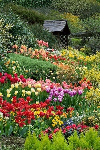 Tulips At Little Larford Worcestershire England With Images Flower Landscape