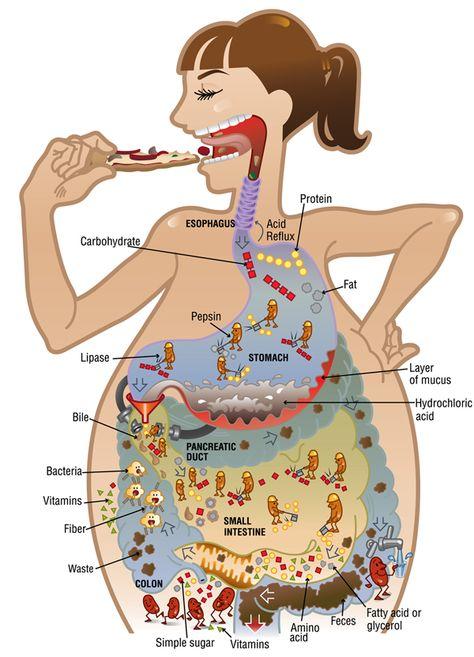 omeprazol no es protector de estomago