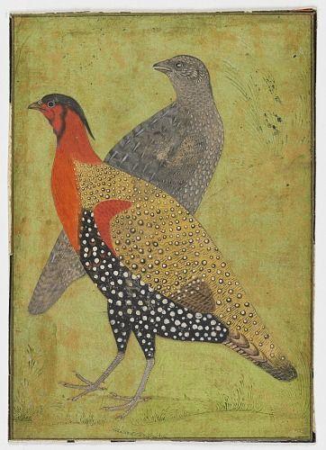 Two Pheasants Freer Gallery Of Art Arthur M Sackler Gallery In 2020 Bird Art Art Mughal Paintings