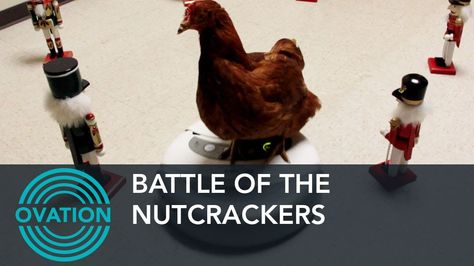 Battle of the Nutcrackers - Pets on a Roomba Edition - Ovation (+playlist)