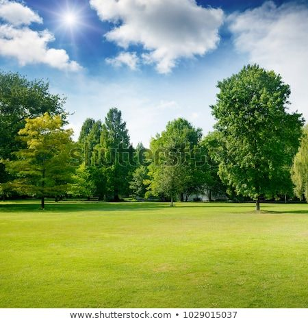 Image Result For Bright Sunny Landscape Beautiful Park Landscape Park