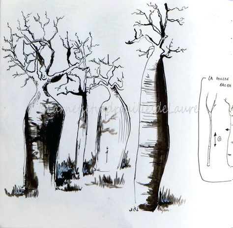 Carnet De Voyage Madagascar Page 12 Baobab Carnet De Voyage