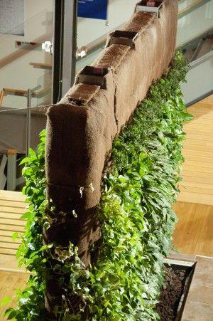 An indoor living wall garden - Gorgeous low-maintenance garden and art statement combined!