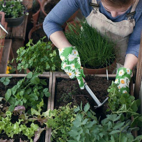 Jetzt Ist Die Beste Pflanzzeit Auch Ohne Garten Kannst Du Frisches Gemuse Leckeres Obst Und Aromatische Krauter Ernten In Unserem Blog Erfahrst In 2020 Herbs