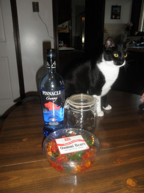 How to Make Drunk Gummy Bears- Melissa, cat not included in recipe!