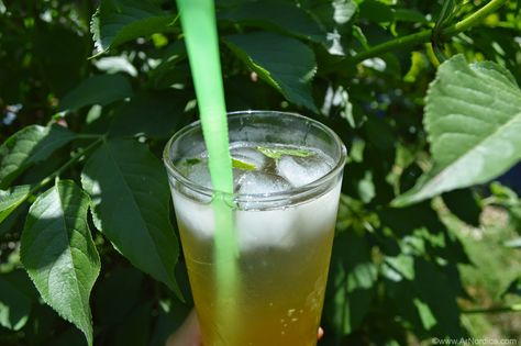 ArNordica: Receta: Cordial de Sauco | Elderflower cordial recipe