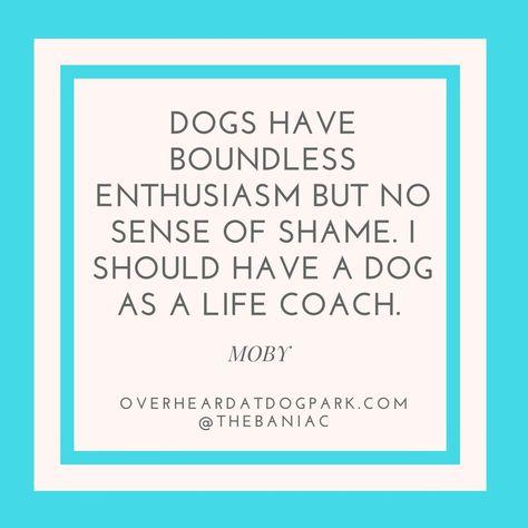 rescuedog #dog #doglife #dogpark...