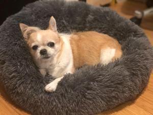 Petscomfy Gemutliches Hundebett In 2020 Hunde Hunde Bett Hundebett