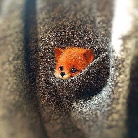 So cute, little member of the fox family and sooooooo cute - Niedliche tiere - Animals Baby Animals Super Cute, Cute Little Animals, Cute Funny Animals, Cute Cats, Cute Little Things, Little Fox, Baby Animals Pictures, Cute Animal Pictures, Felt Animals