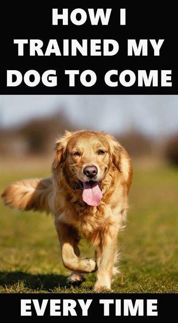 Pin On Dog Training Certification