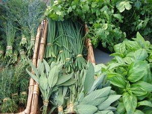Ten Most Profitable Herbs To Grow – Profitable Plants