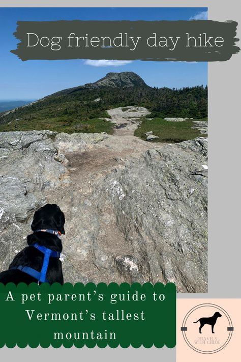 A pet parent's guide to hiking Vermont's Mount Mansfield #vermont #hiking #dogs #dog #hikingwithdogs