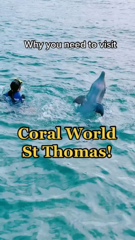 Coral World Ocean Park - Marine Wildlife Park in USVI St Thomas