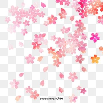Falling Cherry Petals Pink Petal Cherry Petals Png Transparent Clipart Image And Psd File For Free Download Cherry Blossom Petals Japanese Flowers Japanese Cherry Blossom