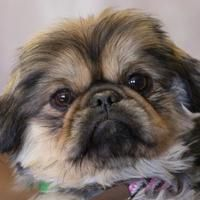 Available Pets At National Mill Dog Rescue In Colorado Springs Colorado Rescue Dogs Pets Dogs