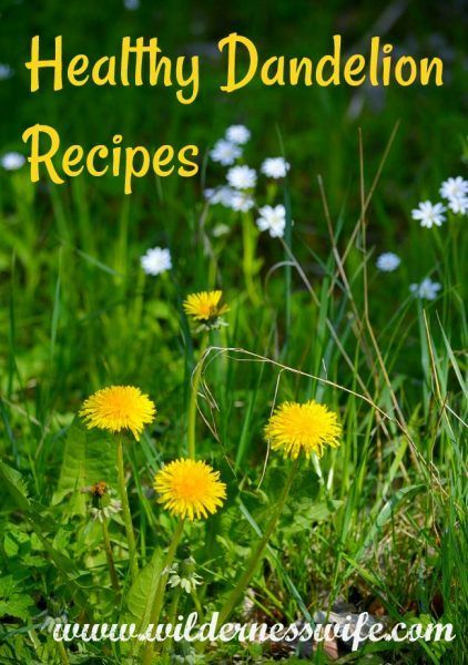A Culinary Spring In Maine Dandelions And Fiddleheads The Wilderness Wife Recipe Dandelion Recipes Dandelion Greens Recipes Dandelion Salad