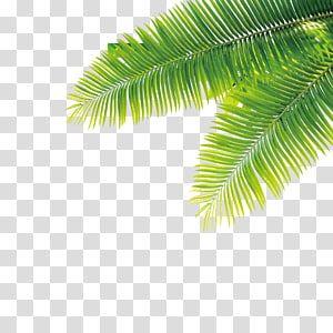 Tropics Plant Computer File Tropical Plant Transparent Background Png Clipart Green Leaf Wallpaper Tree Photoshop Autumn Leaf Color