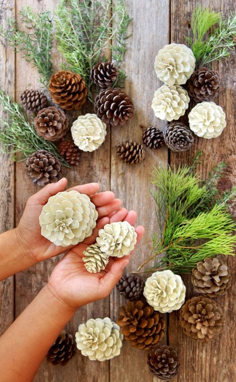 "Make beautiful ""bleached pinecones"" in 5 minutes without bleach! Non-toxic & easy DIY craft, perfect for fall, winter, Thanksgiving & Christmas decorations! for christmas table easy diy Easiest 5 Minute 'Bleached Pinecones' {without Bleach! Easy Christmas Decorations, Pine Cone Decorations, Christmas Diy, Christmas Wreaths, Christmas Ornaments, Pinecone Christmas Crafts, Decorating With Pine Cones, Rustic Christmas, Outdoor Christmas"