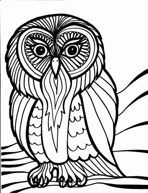owl from httpwwwdesenhosbiz  vogel malvorlagen