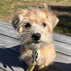 Wethersfield Ct Terrier Unknown Type Small Meet Missy A Dog For Adoption Dog Adoption Pet Adoption Terrier